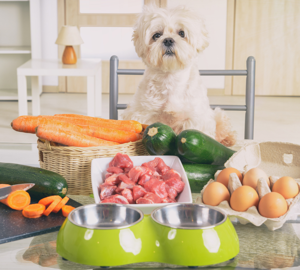 dog with meat and veg